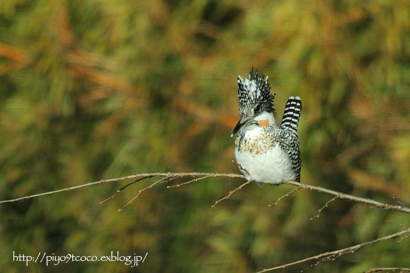 今年初撮りの鳥さんは♪_d0367763_20253529.jpg