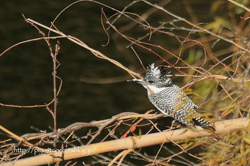 今年初撮りの鳥さんは♪_d0367763_20253605.jpg