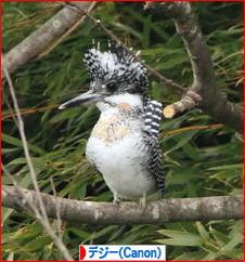 今年初撮りの鳥さんは♪_d0367763_20253697.jpg