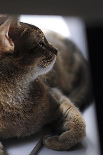 [猫的]今日の一枚_e0090124_22064781.jpg