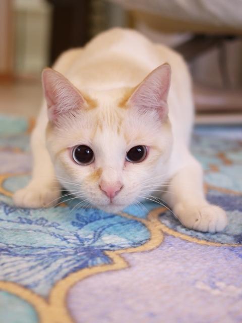 猫のお留守番 ニーナちゃん編。_a0143140_21035116.jpg