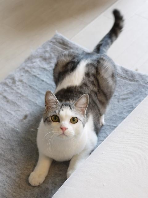 猫のお留守番 ムーくん編。_a0143140_21075259.jpg