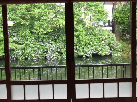 7月のお休みのお知らせ&梅雨の花_a0217348_17284640.jpg
