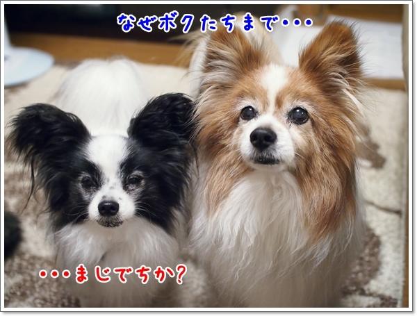 d0013149_23152267.jpg