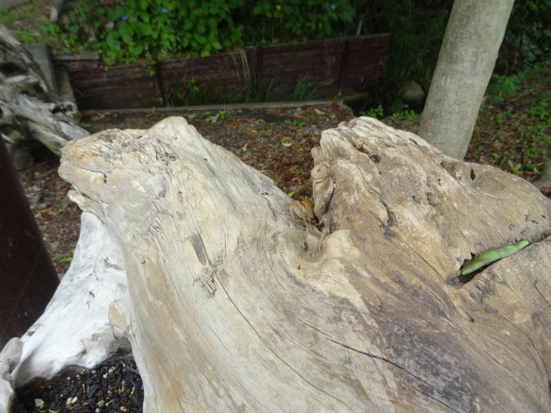 竹製トンボのクラフト・・・うみべの森_c0108460_21434197.jpg