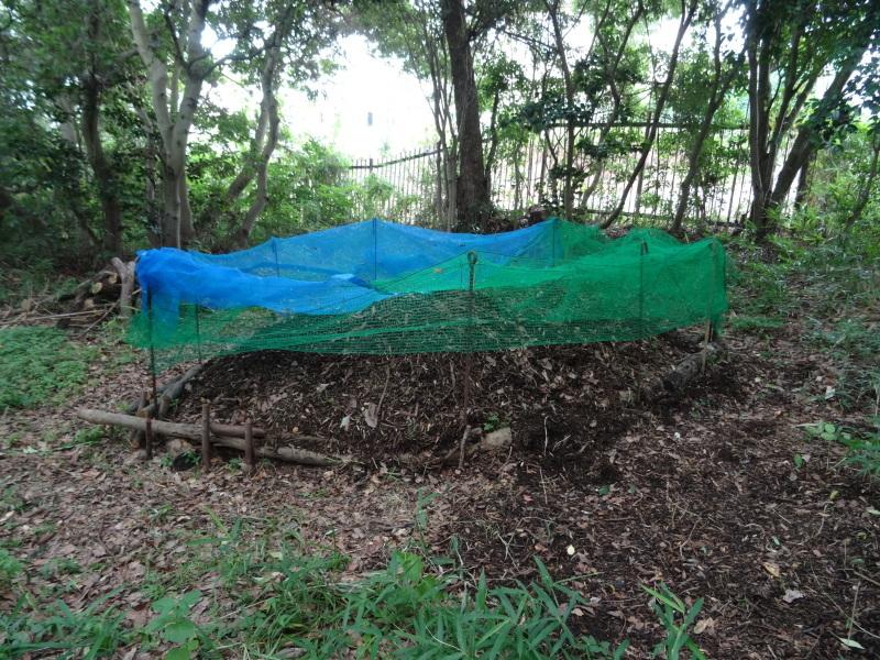 竹製トンボのクラフト・・・うみべの森_c0108460_21445243.jpg