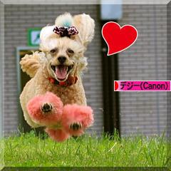 シロハラ♪_d0367763_18553253.jpg