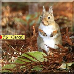 リスだ ♪ リスだ ♪ リス祭り~  ヽ(´▽`)ノ♪_d0367763_21054810.jpg