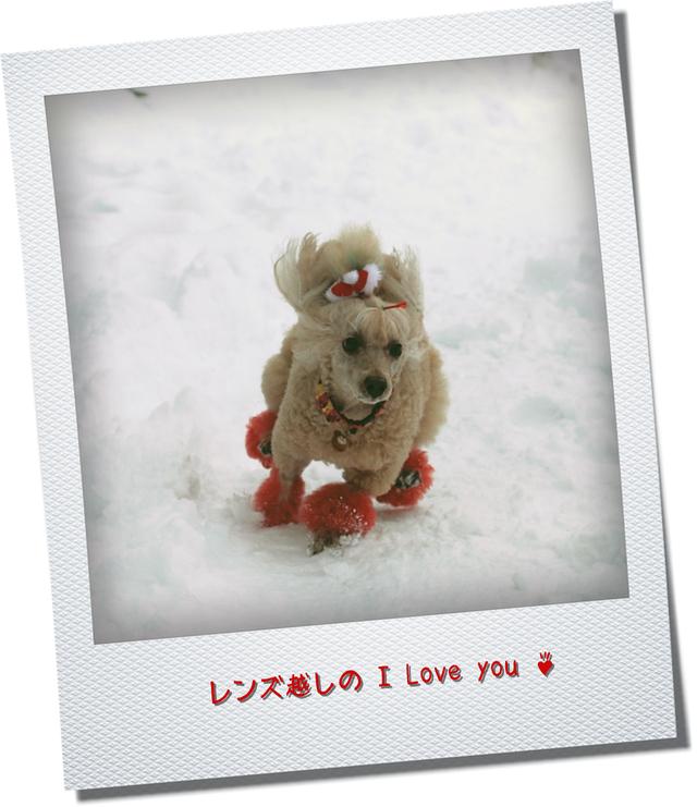 雪景色に焦がれて♪_d0367763_21075899.jpg