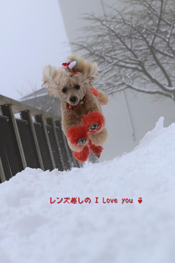 雪景色に焦がれて♪_d0367763_21080326.jpg