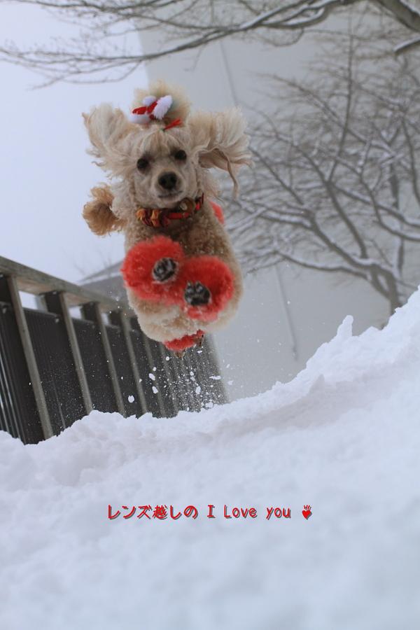 雪景色に焦がれて♪_d0367763_21080825.jpg