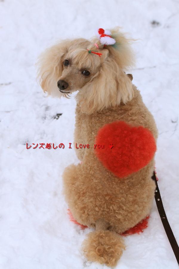 雪景色に焦がれて♪_d0367763_21081284.jpg