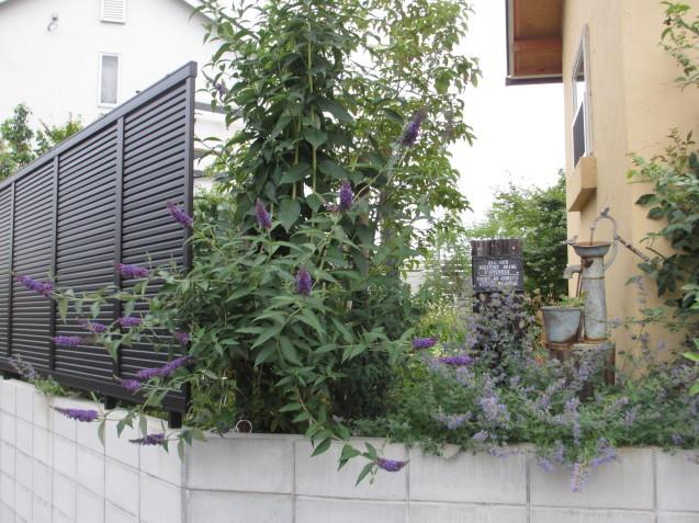 ブットレアとスカビオサの渋目の色が開花しています_a0243064_23253362.jpg