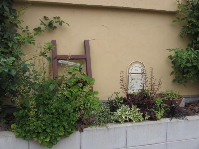 ブットレアとスカビオサの渋目の色が開花しています_a0243064_23313747.jpg