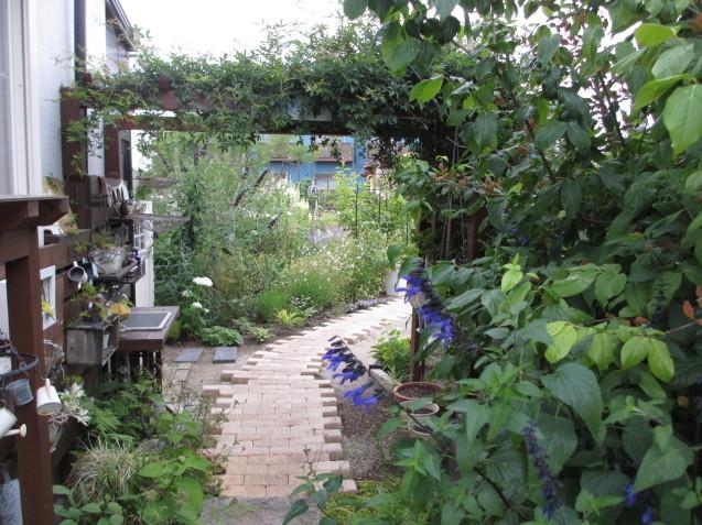 ブットレアとスカビオサの渋目の色が開花しています_a0243064_23461490.jpg