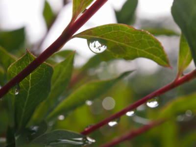 雨降りのあと_a0129867_7452627.jpg