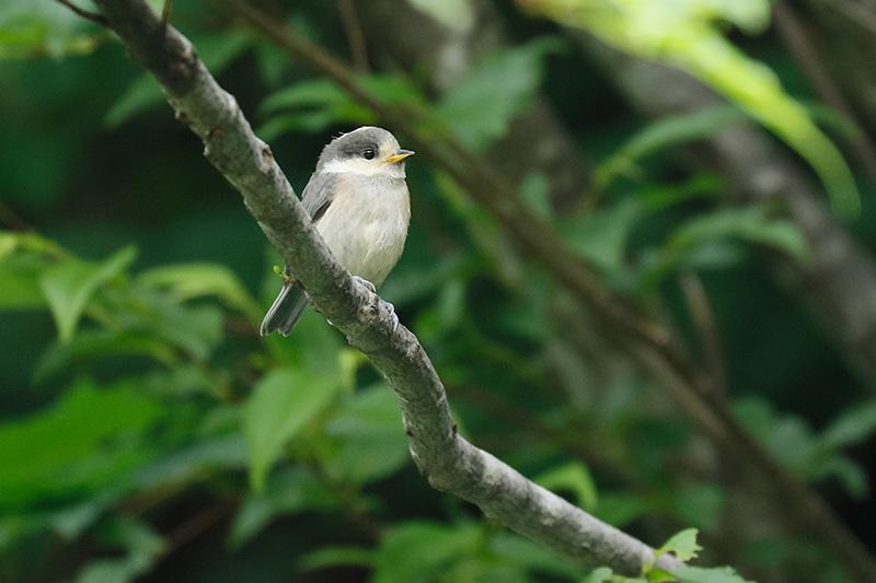 幼鳥に出会ったのは~_f0368272_23041686.jpg