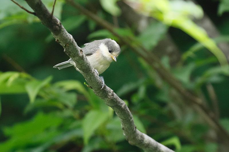 幼鳥に出会ったのは~_f0368272_23044687.jpg