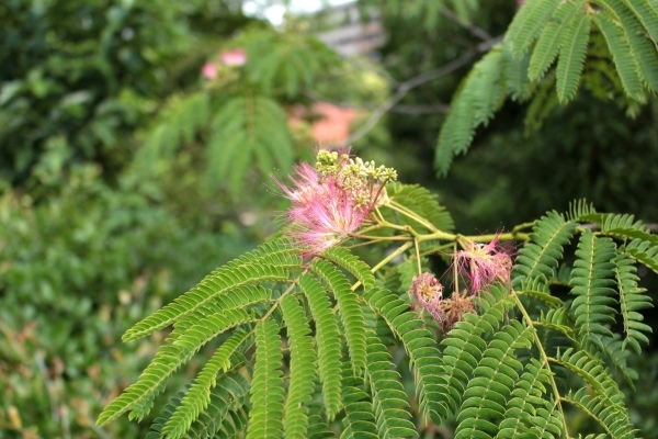初夏の花が咲き始めました_d0121678_13180602.jpg