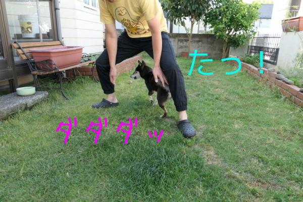 f0369014_15014793.jpg