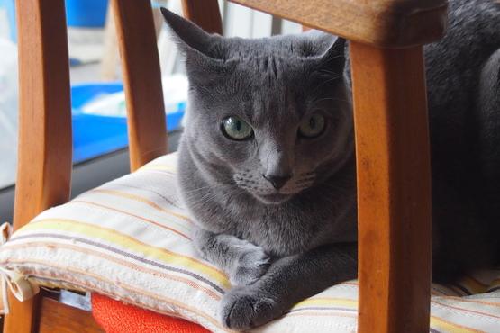 世界ネコ歩きにはまっている。_a0240026_615815.jpg