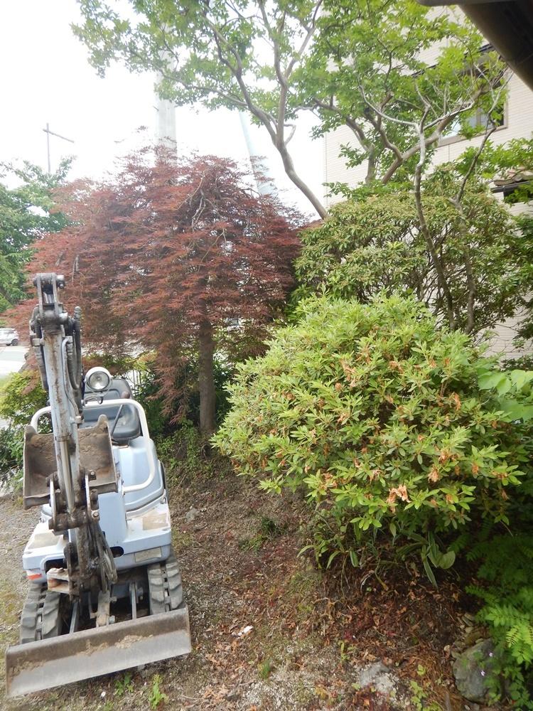 植木の移植_c0111229_20150342.jpg