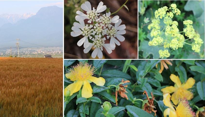 初夏の花たちと_a0212730_21441905.jpg