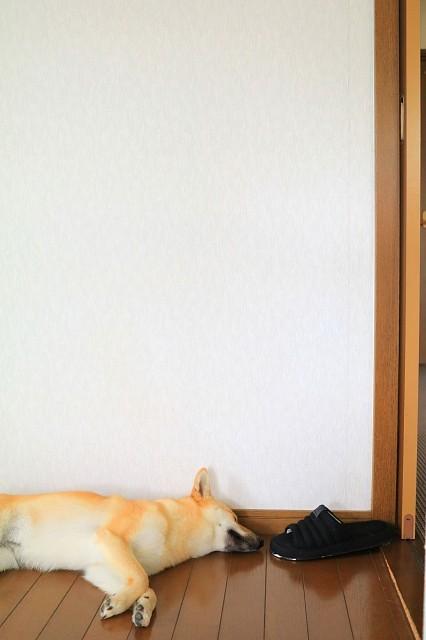 ヒトコマ写真㊾_e0365036_10052440.jpg