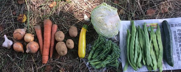 6月24日(土)着の野菜セットの中身_c0177665_14002121.jpg