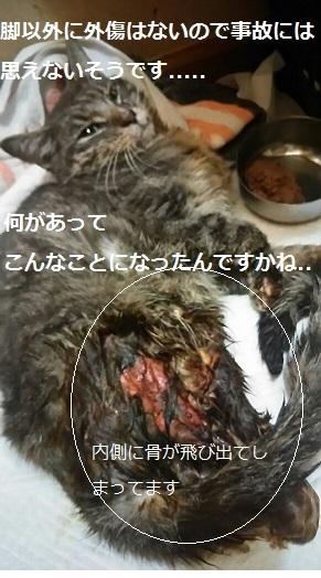 右後ろ脚負傷の猫の治療_f0242002_22192222.jpg