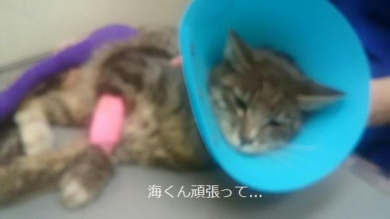 右後ろ脚負傷の猫の治療_f0242002_22193345.jpg