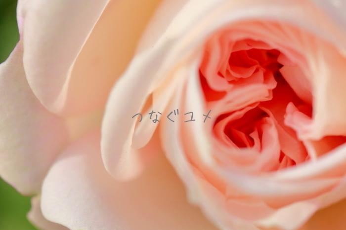 d0258417_13400938.jpg