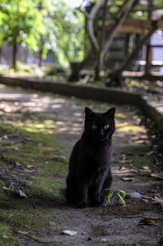 [猫的]街道の猫_e0090124_22442054.jpg