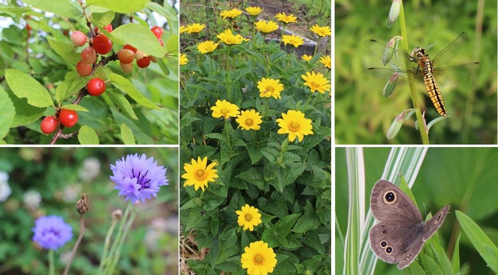 花と虫たち_a0212730_21381608.jpg