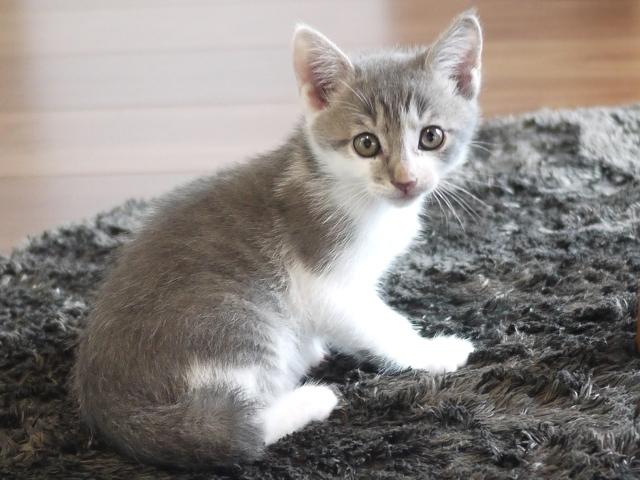 猫のお留守番 バーニーくん編。_a0143140_15520707.jpg