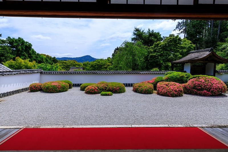 正伝寺のサツキ_f0155048_2252156.jpg