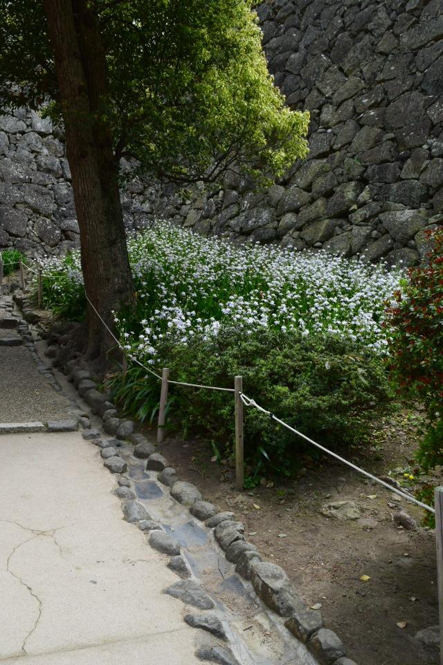 姫路城_a0110756_10590152.jpg