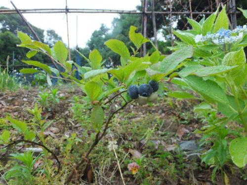 好きな果物は田舎の味_d0336460_12113153.jpg