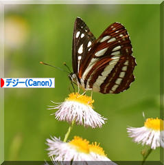 d0367763_19151309.jpg