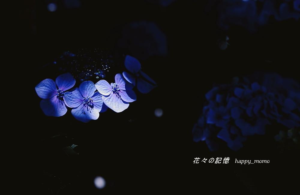 久しぶりの雨・・_c0357781_09555838.jpg