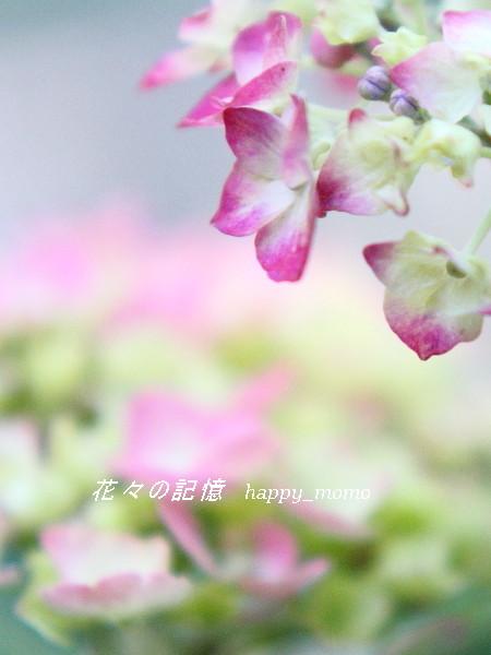 久しぶりの雨・・_c0357781_09561235.jpg