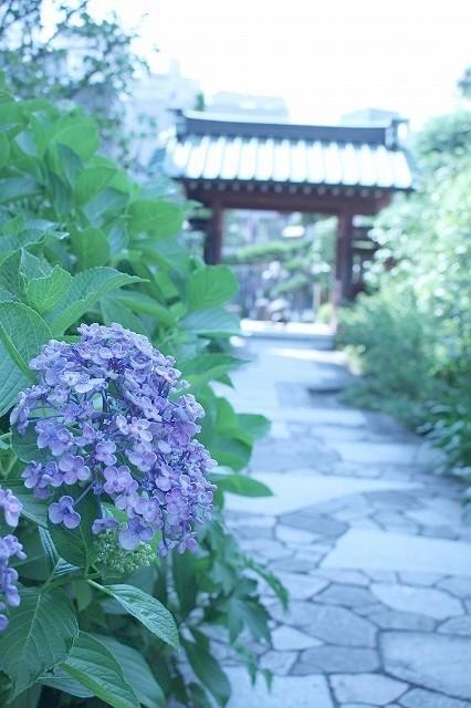 鎌倉 大巧寺_f0374092_22013247.jpg
