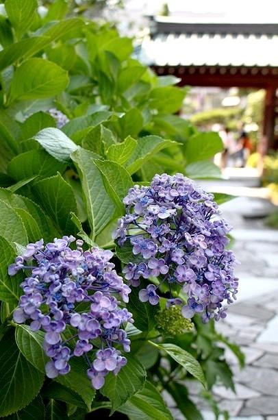 鎌倉 大巧寺_f0374092_22060599.jpg