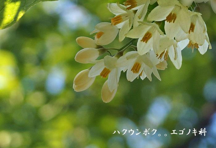 花_d0162994_08502388.jpg