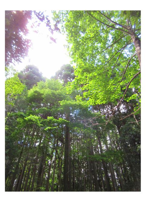 春・山あそび④・小学生クラス(上高野)_f0211514_00593913.jpg