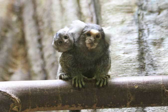 千葉市動物公園「動物科学館」~小型サルの誘惑_b0355317_21360869.jpg