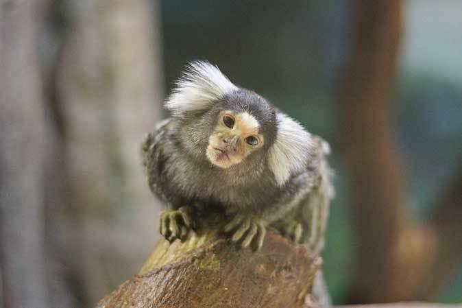 千葉市動物公園「動物科学館」~小型サルの誘惑_b0355317_21380532.jpg