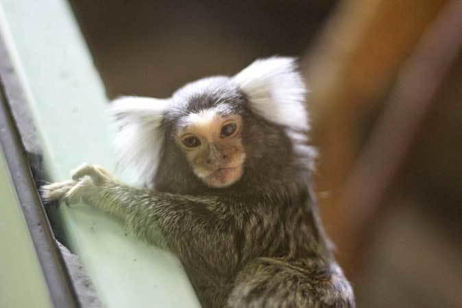 千葉市動物公園「動物科学館」~小型サルの誘惑_b0355317_21384507.jpg