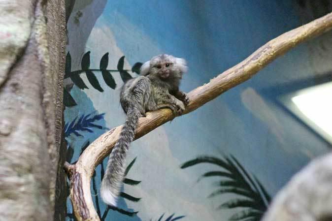 千葉市動物公園「動物科学館」~小型サルの誘惑_b0355317_21403677.jpg