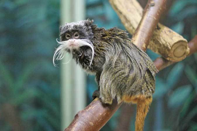 千葉市動物公園「動物科学館」~小型サルの誘惑_b0355317_21413277.jpg